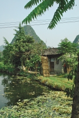 In search of the osmanthus flower in Yangshuo, Part II