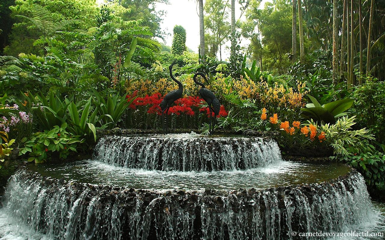 Promenade au jardin national des orchid es singapour for Le jardin des fleurs
