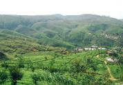 Meet the tea pickers of Sri Lanka