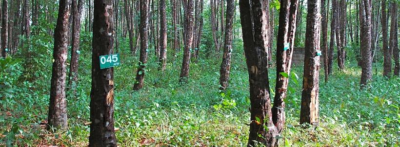 scent-corner-thailand-agarwood-0
