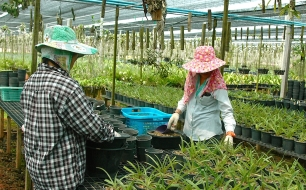 Visit to an orchid farm in the Ratchaburi region of Thailand