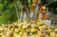 Coconut & blossom sugar