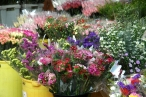 The flower market of Mong Kok, Hong Kong