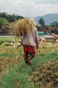 scent-corner-indonesia-rice-fields-4