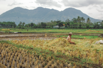 scent-corner-indonesia-rice-fields-8