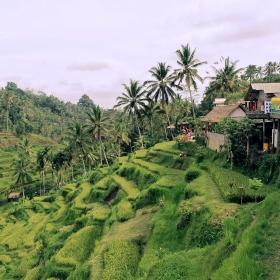 Your scented travel memories: Bali