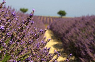 Your scented travel memories: Provence