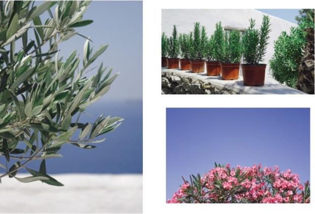Santorini_Diary8