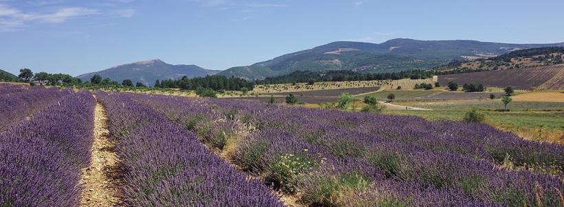 scent-corner-provence-lavender-0