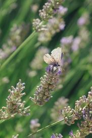 scent-corner-provence-lavender-10