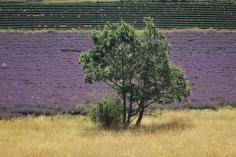 scent-corner-provence-lavender-5