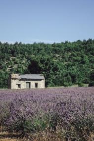 scent-corner-provence-lavender-2