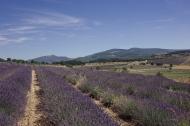 scent-corner-provence-lavender-4
